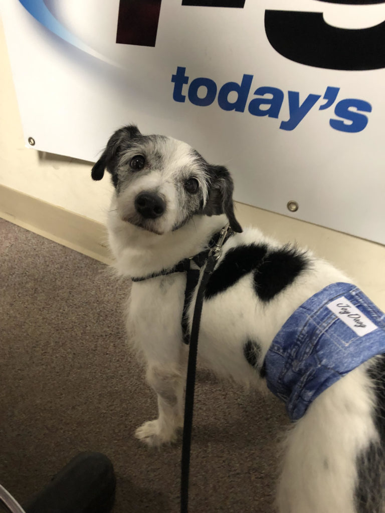 Pet of the Week - Today's Variety, I-94